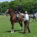 Покана до спортни сдружения, занимаващи се с конен спорт