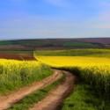 Обява за търг за земеделски земи