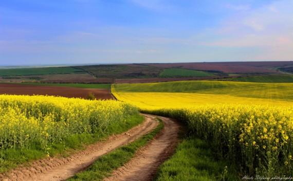 Община Генерал Тошево стартира процедури за търгове за неотдадени  земи от Общински поземлен фонд